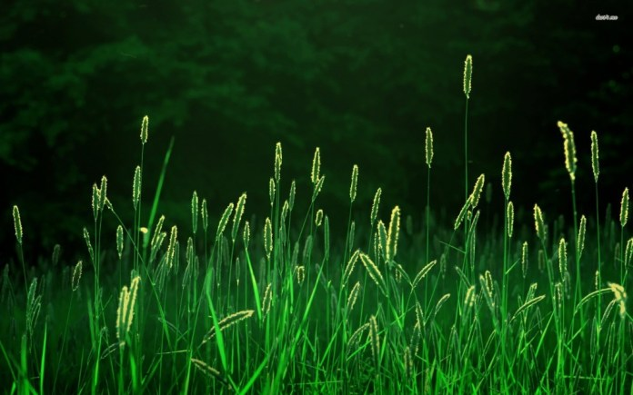 Grama-Verde36