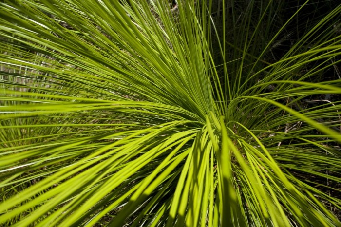 Nature Detail of Bright Green Grass Fronds Growing Outdoors in Sunlight