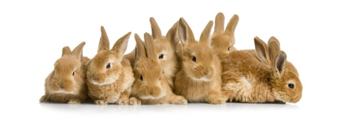 Group of Bunnies wb(1)