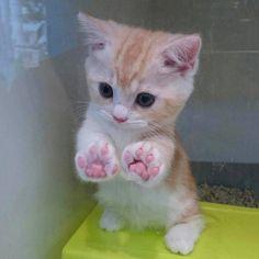 gatinha-filhote