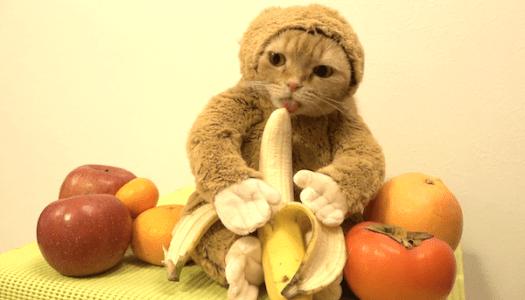 gato-banana