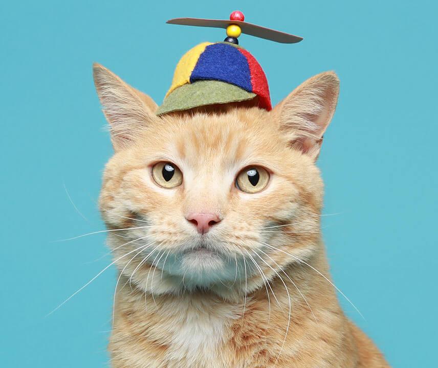 gato-engracado