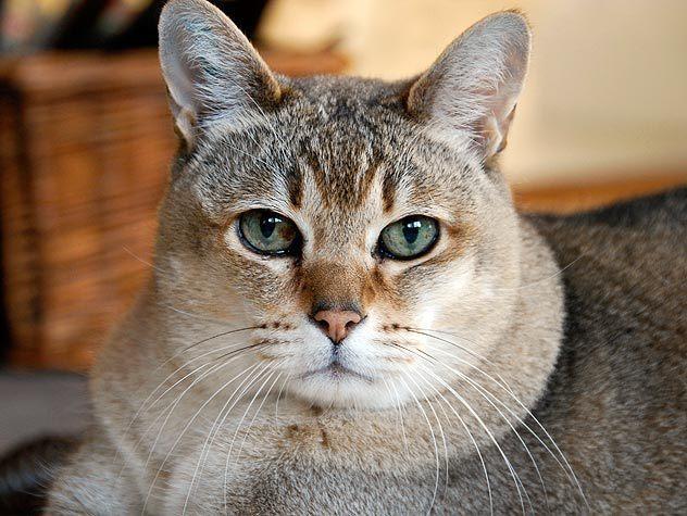 gato-serio