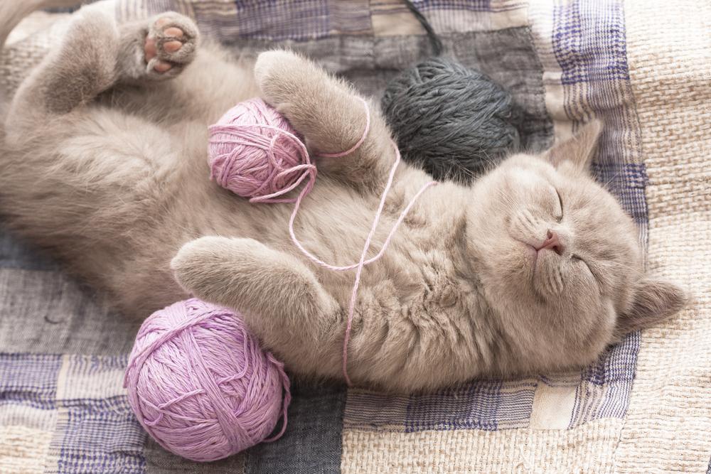 gatos-bolinhas-la