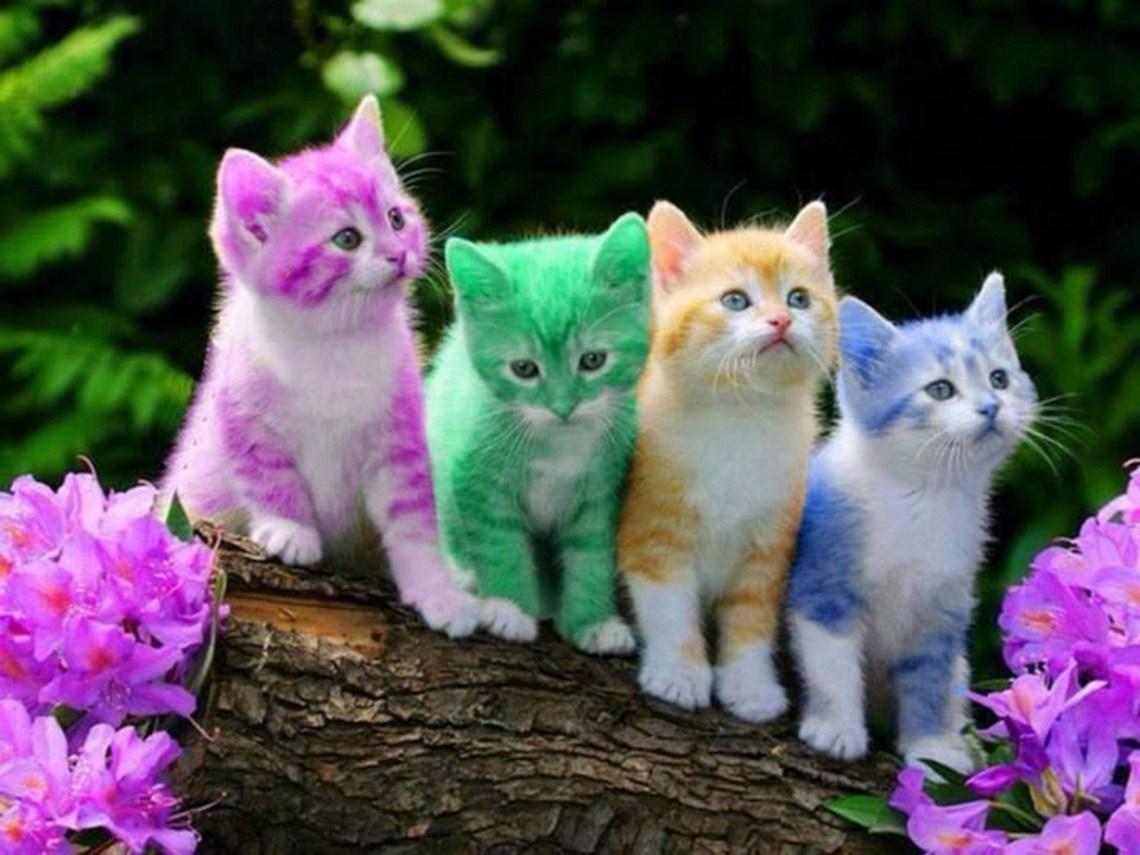gatos-coloridos