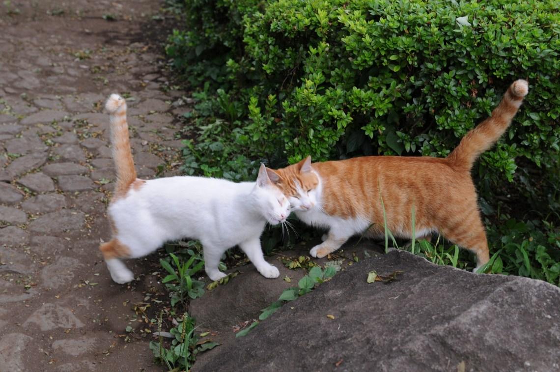 gatos-namorando