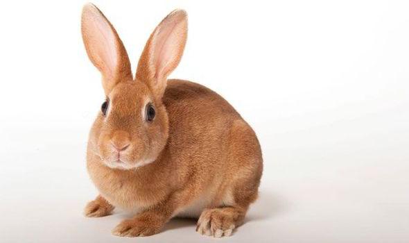 rabbit-448431