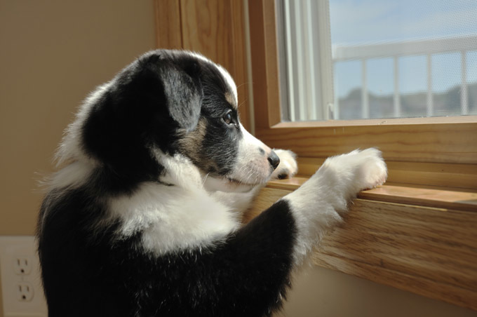 separation-anxiety-dogs-2