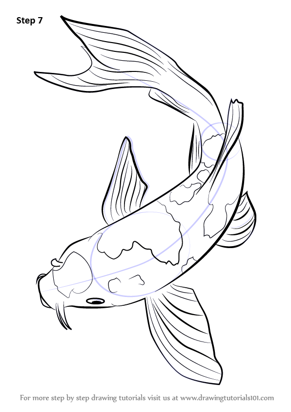 how-to-draw-Koi-Fish-step-7