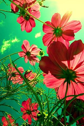 flowers-v2-mobile-wallpaper