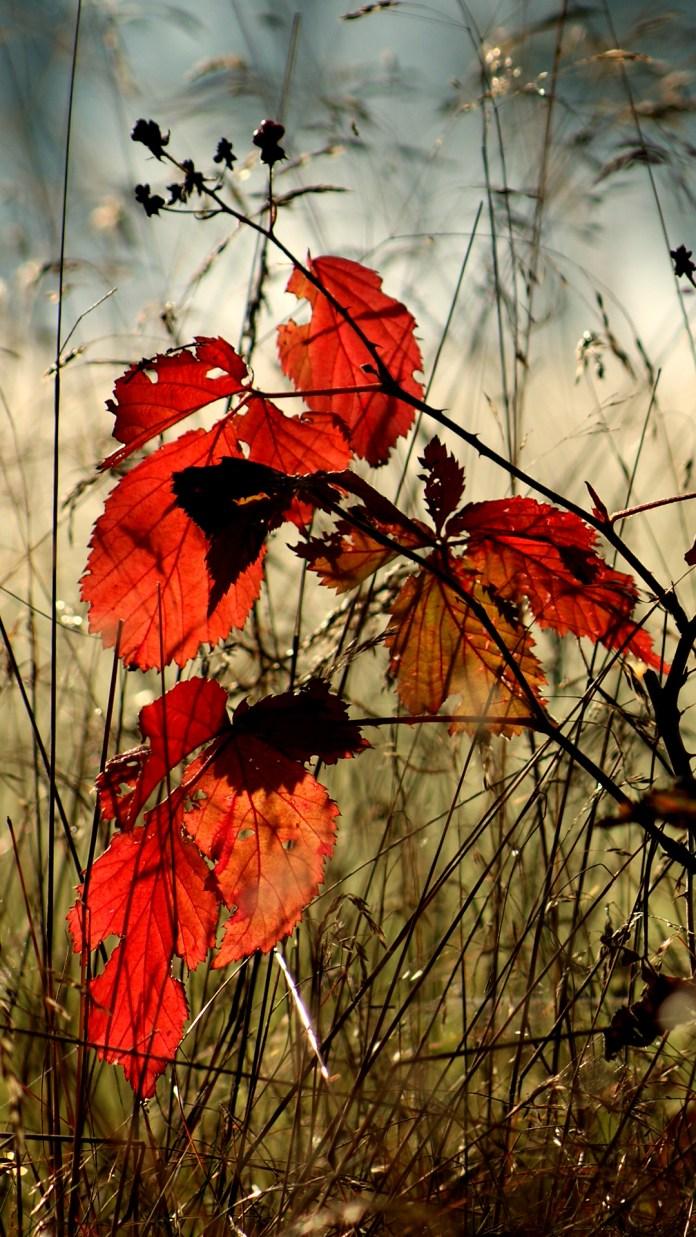 autumn-leaves-2217