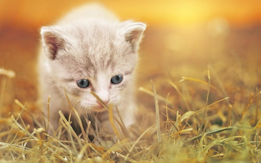 cute_kitty_hd-wide