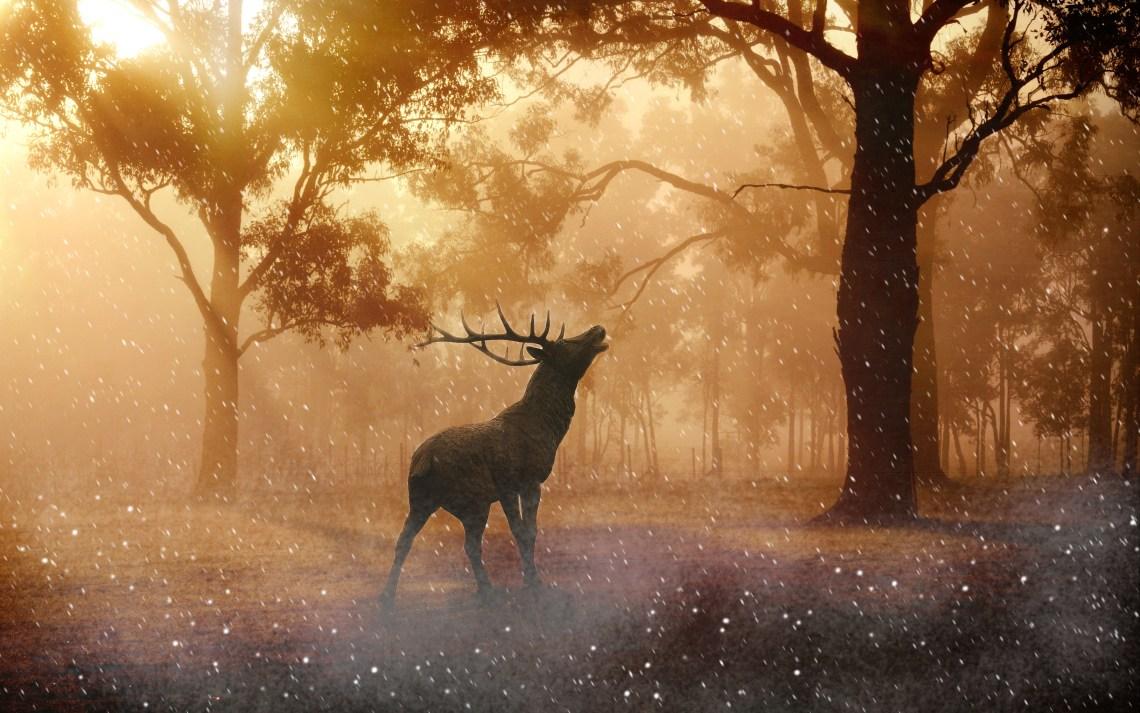 fallow_deer_autumn_4k-wide