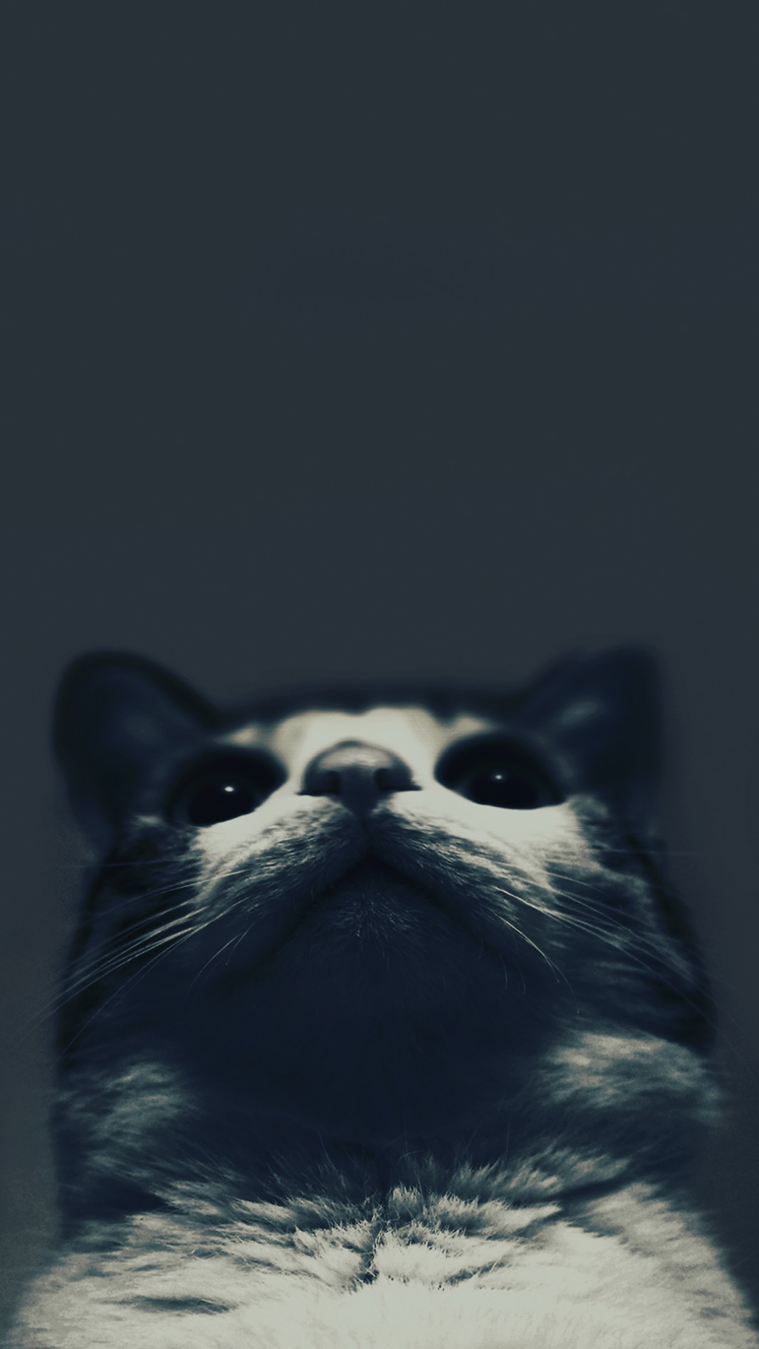 kitty-blues-5598