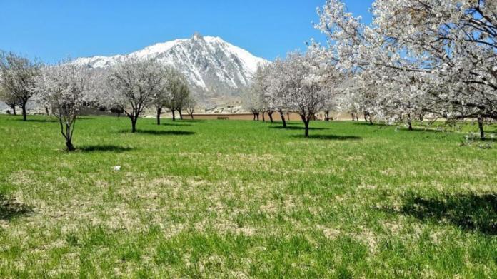 sweet-home-afghanistan-1421370329