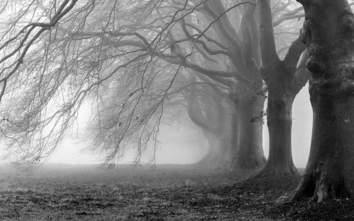 100 Imagens Para Tumblr Em Preto E Branco