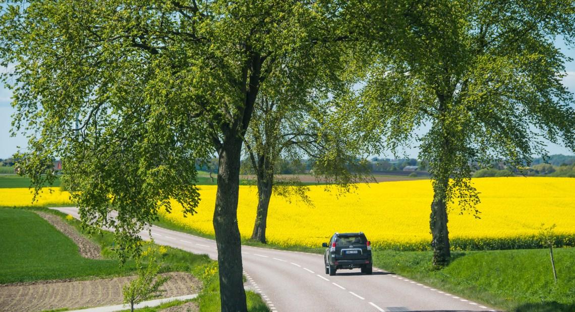"""Cesta z města"" (foto Susanne Nilsson)"