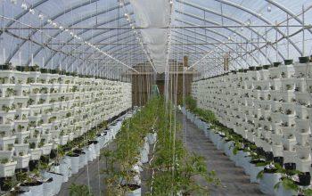 Základem Aqua-reaktoru je hydroponické pěstování plodin