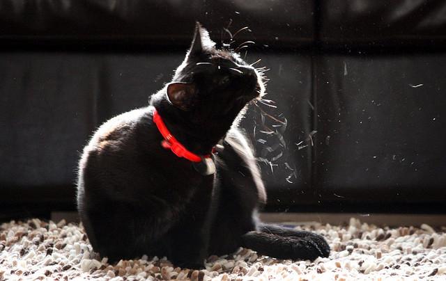 Houston SPCA Summer Safety Pet Tips (6/6)