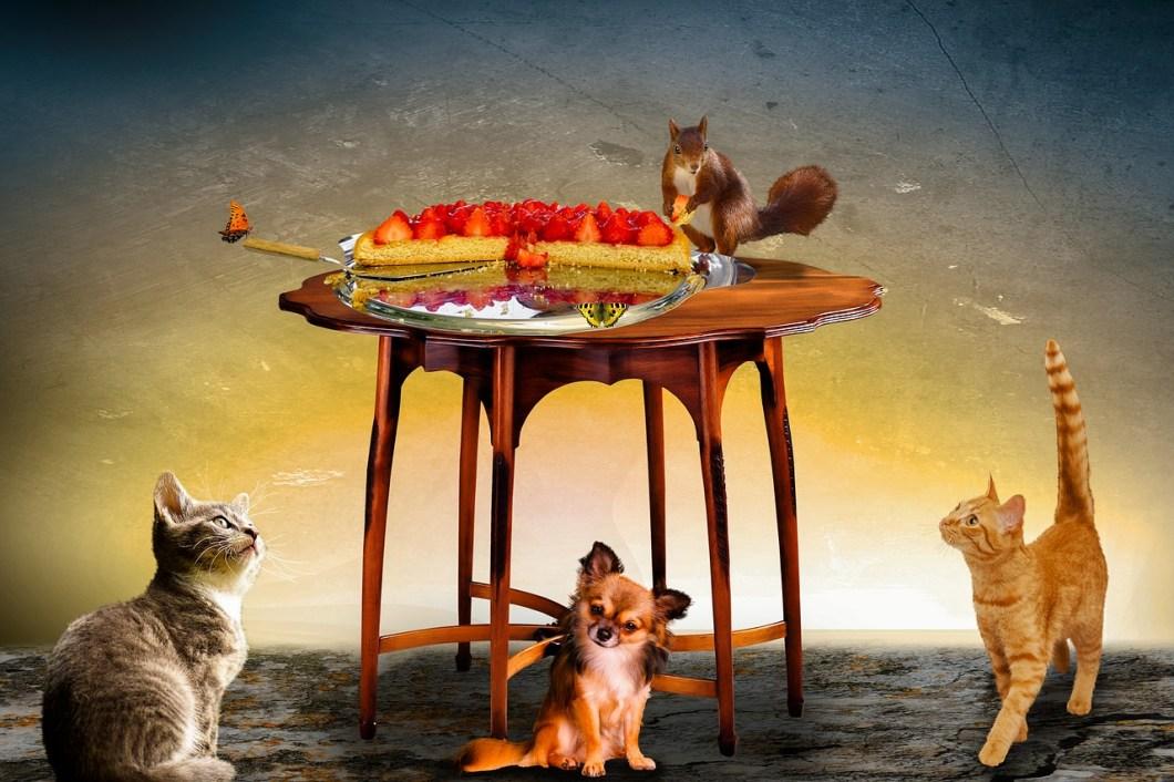 La salute degli animali domestici e quello che mangiano