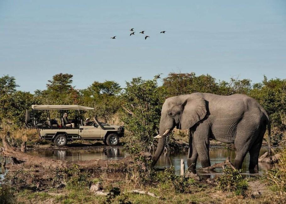 Skybeds Camp Suite Okavango Delta-Elephant