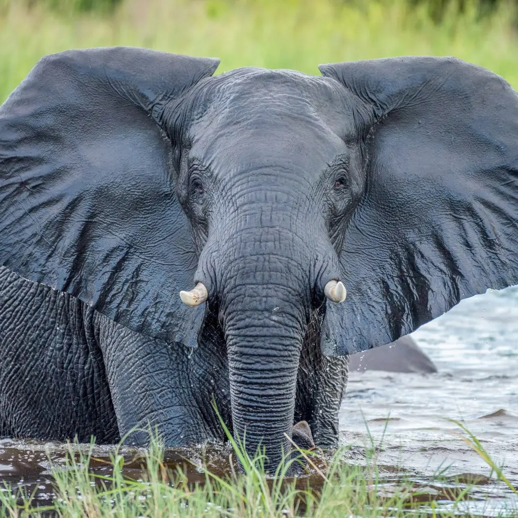 Africa- Experience the Adventure