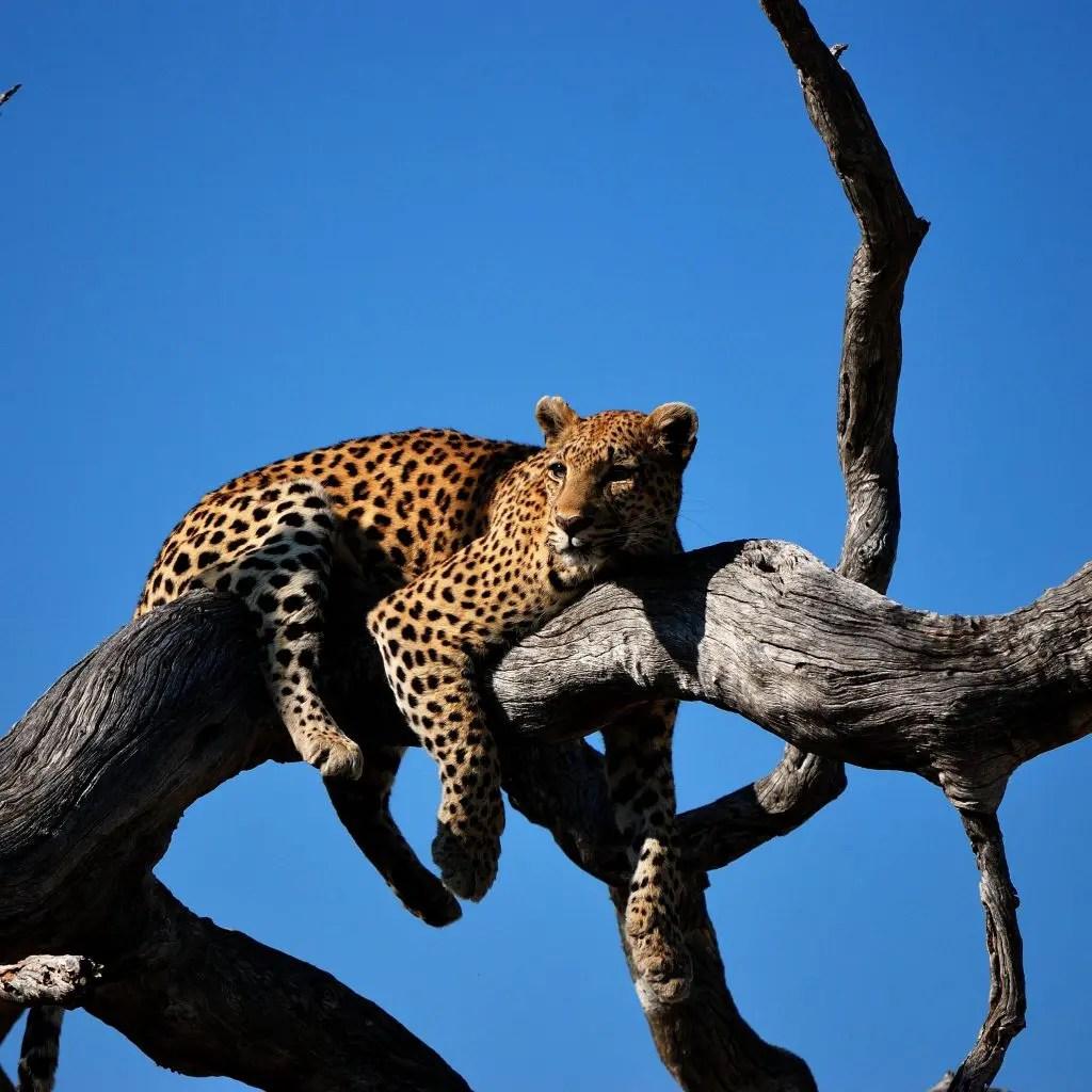 Botswana-the Cradle of Wildlife
