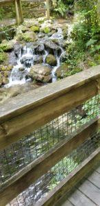 Rainbow Springs/Falls