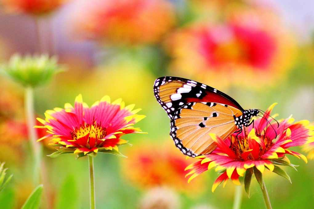 butterfly perched on flower