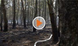 Screen_Feuer_Gildehaus_2