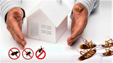 Photo of Control Pest With Effective Cockroach Control Services