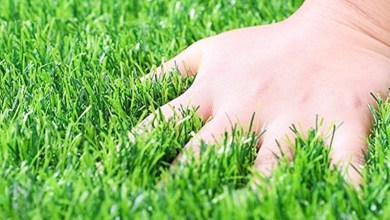 Photo of How to Buy Grass Carpet?
