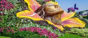 amazing-miracle-garden