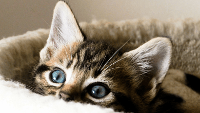 Photo of Best Ways To Take Care of Your Pet Cat