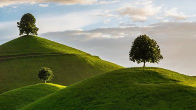 Photo of 7 Surprising Facts About Trees You Didn't Know