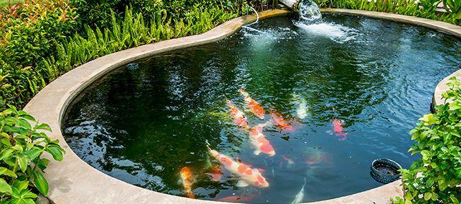Best pond pumps review