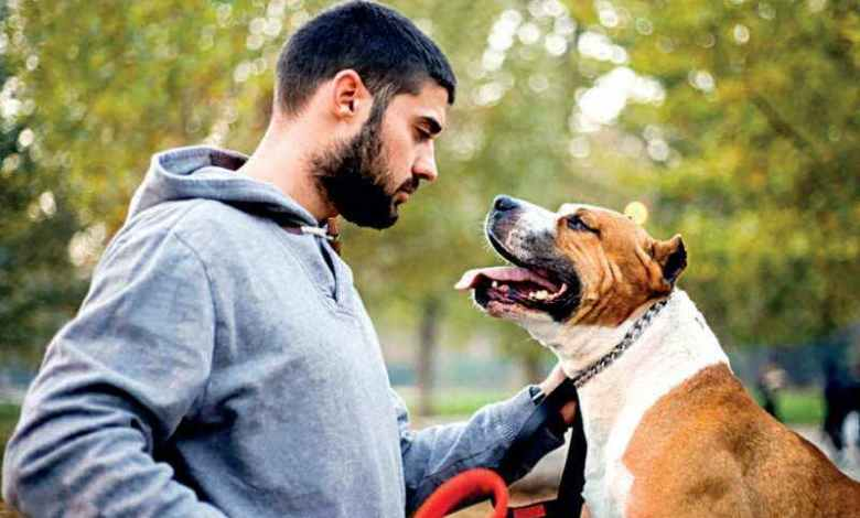 Peter harreaves - Dog Trainer