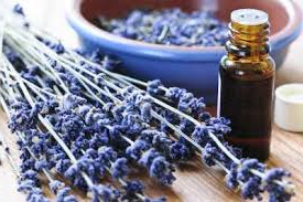 Photo of Natural Healing Oils – Benefits That Nature Supplies
