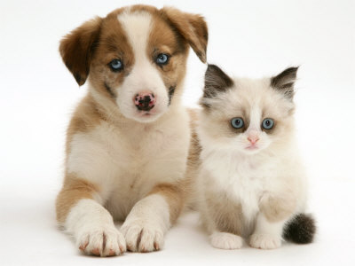 7 cosas a tener en cuenta para adoptar una mascota