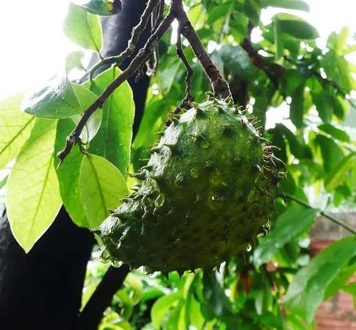 Frutas peruanas para una larga vida. Parte I.