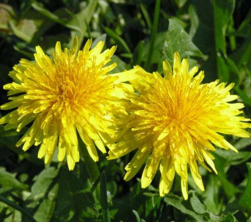 Remedios verdes para luchar contra el colesterol. Parte I