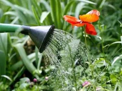Todo lo que debes saber sobre los insecticidas biológicos