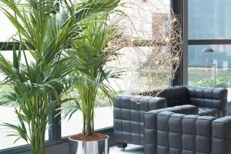 Un bello elemento decorativo dentro de casa: las palmeras