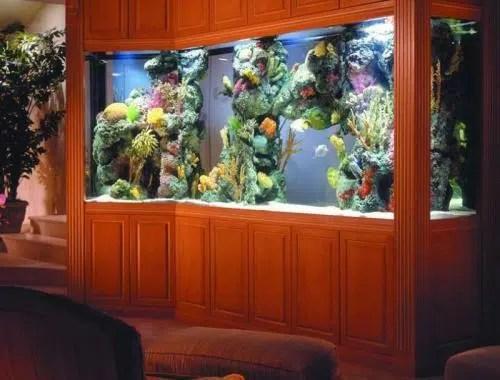 Un toque de vida, color y vistosidad: un acuario
