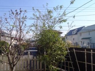 植木の剪定