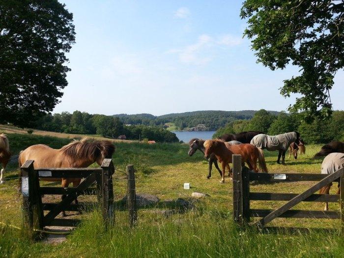 Magnifique paysage campagne suédoise région Kungsbacka