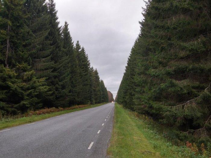Route de campagne EuroVelo 10 Estonie