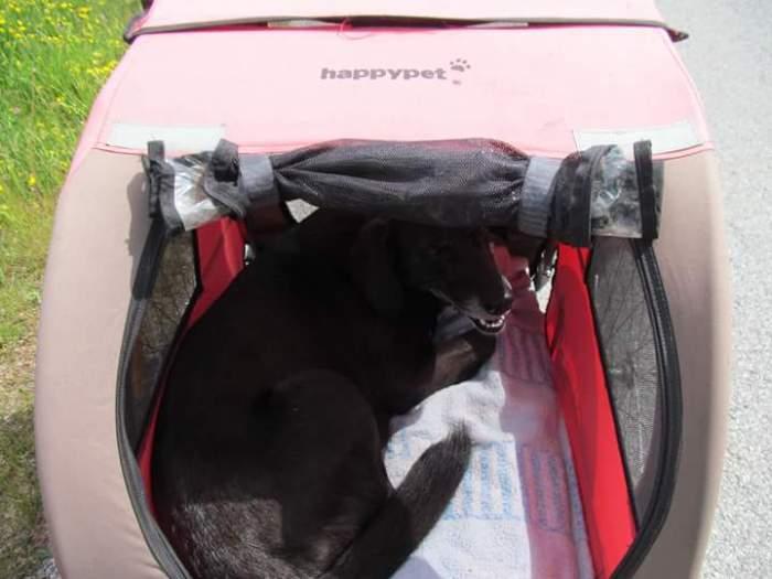 remorque voyage a velo chien
