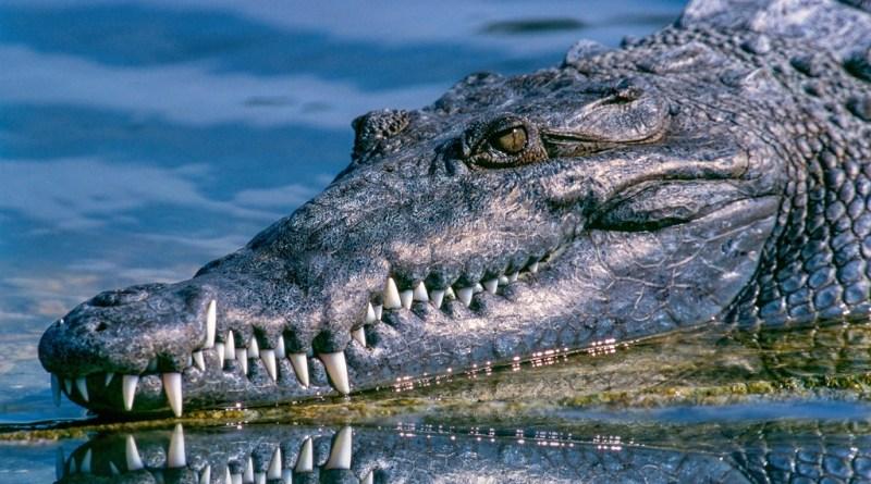 Descubren fósil de 148 millones de años del antepasado del cocodrilo