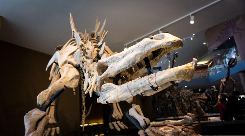 Disputa entre Brasil y Alemania por el fósil de un dinosaurio